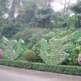 植物小品09